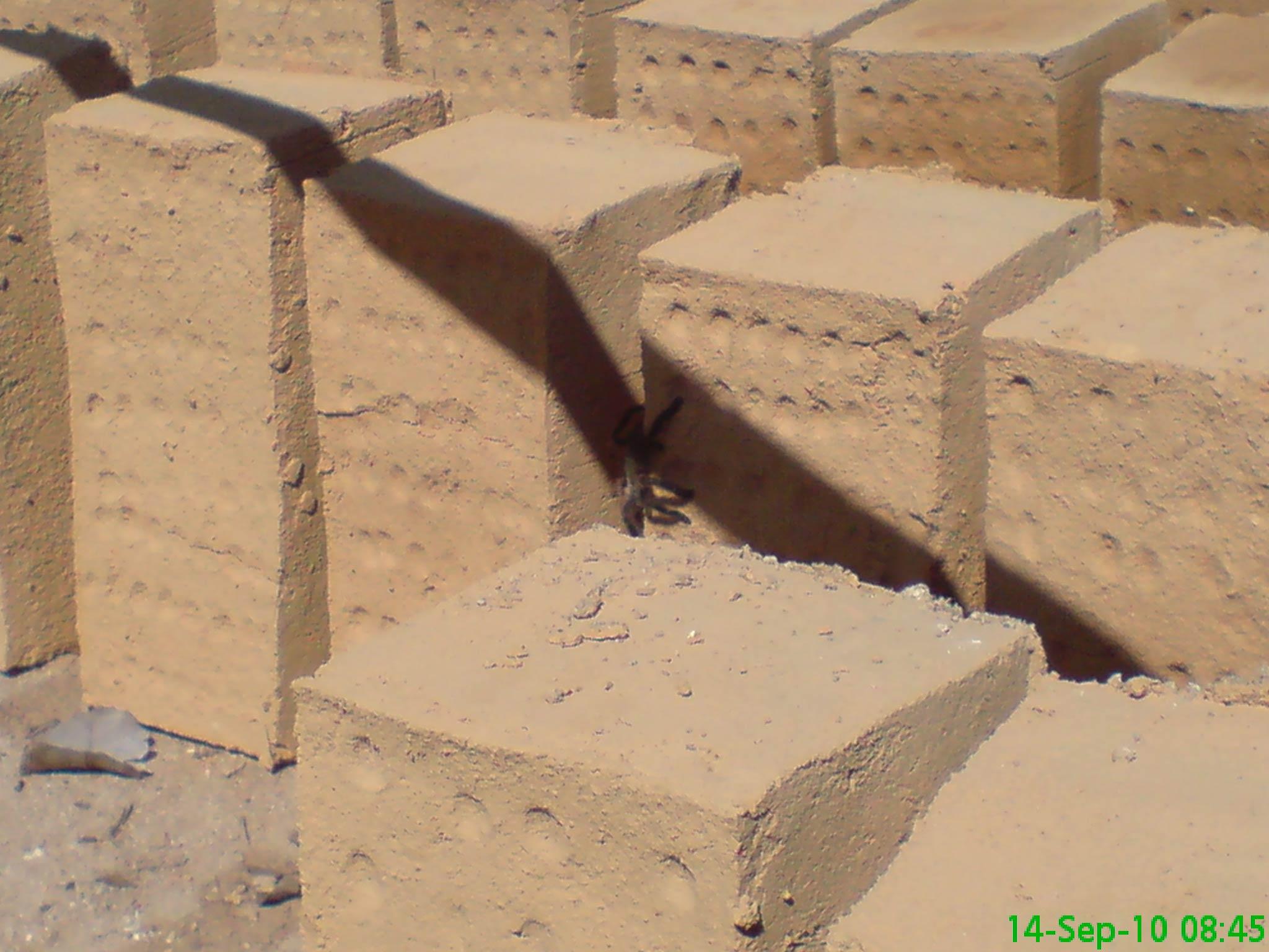 Proceso de secado al sol de los adobes by D. Ferrari, Casa de Barro Arraial D'Ajuda