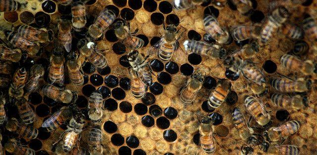 Iniciación a la Apicultura – Permacultura Creativa – Arnedo, La Rioja