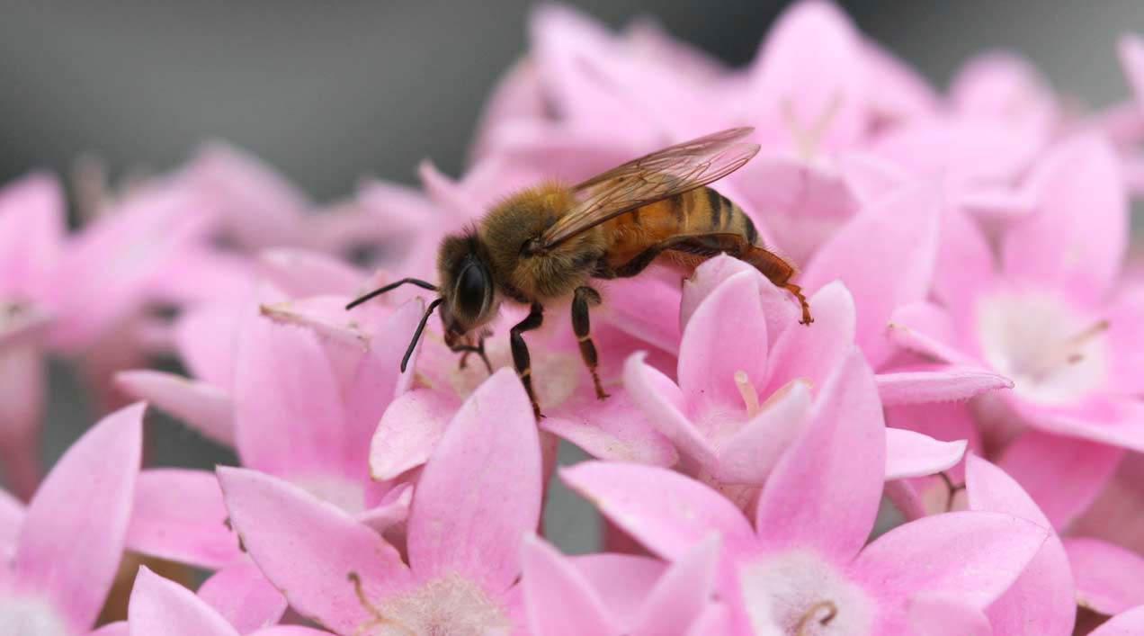 La UE y la lenta agonía de las abejas