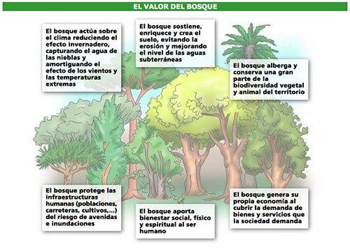 Diversas funciones que cumplen los bosques.