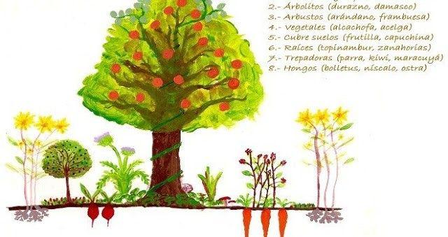 Diferentes estratos de un bosque comestible