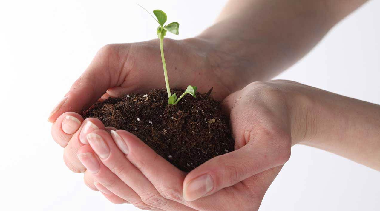 ¿Qué son las Plantas Medicinales? Introducción a la Sección