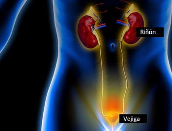 Urólogo, por: Rodrigo Leyton Navarro